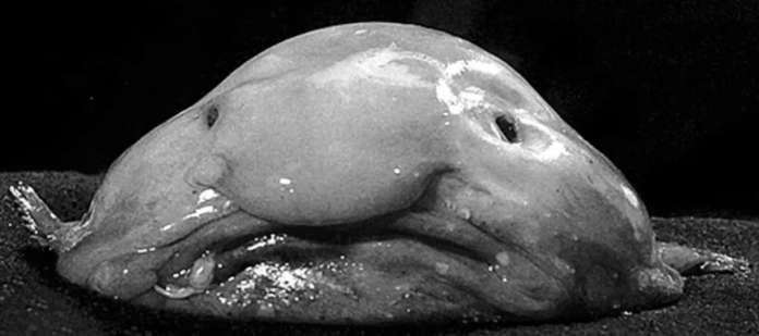 The Blob Michael Gove