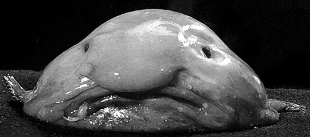 Image result for the blob
